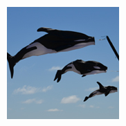Orca Family Fish Windsocks